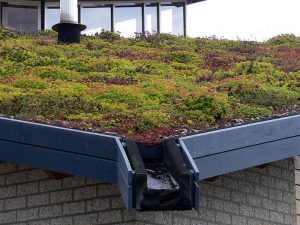 Green Roof Spain