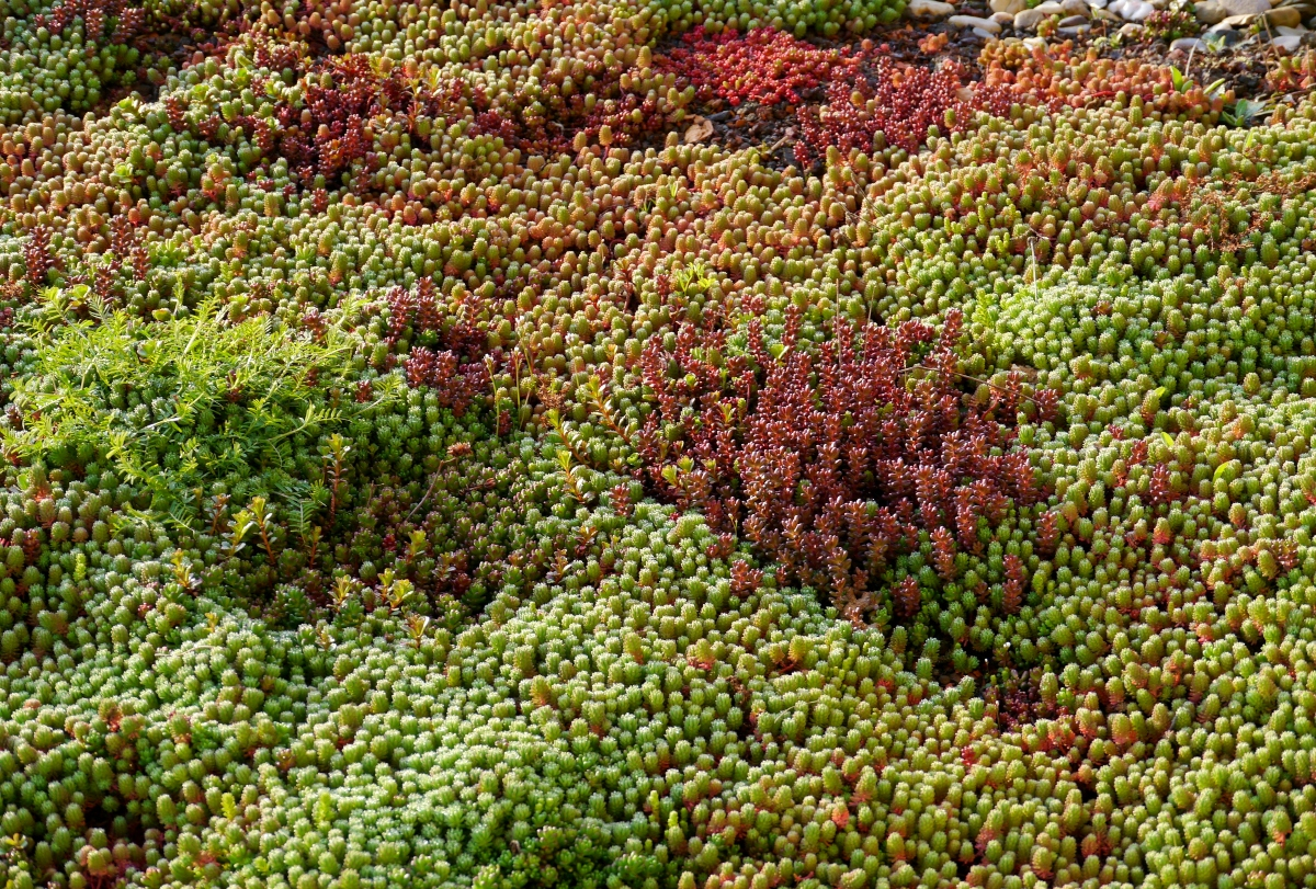Green roofs in Spain can actually feature any colour you like